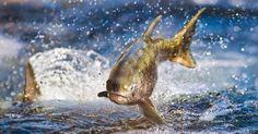 Bio Orbis: Entre rios e mares