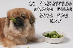 10 surprising human foods dogs can eat