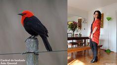 Look inspirado no Cardeal-do-banhado. Veja mais fotos acessando http://bloganimalchic.com/2014/10/03/bichododia-cardeal-do-banhado-por-joao-quental/ #cardealdobanhado