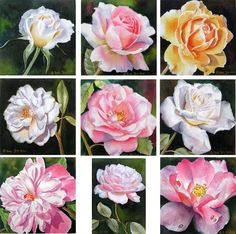 Roses in watercolor, rose paintings, White Roses, Pink Roses, Yellow Roses… Pink Peonies, Yellow Roses, White Roses, Watercolor Flowers Tutorial, Watercolor Rose, Watercolour Tutorials, Realistic Rose, Rosa Rose, Flower Sketches