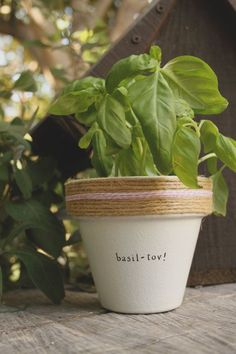 4 Basil-Tov  Basil Herb Indoor and Outdoor Pot or