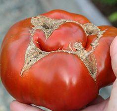 Guide till problem vid tomatodling | Wexthuset Bra Tips, Bra Hacks, Guide, Vegetables, Vegetable Recipes, Veggies