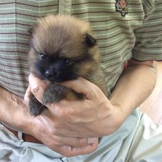 20150517 About 4 weeks old!