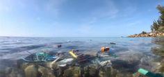 New NatGeo Film Drives Home Impacts of Single-Use Plastics on Oceans, Wildlife, Humans