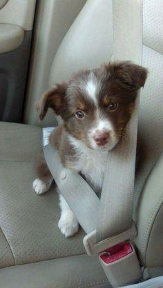 Aww too cute !!!!
