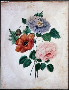 'Aster, Poppy, Rose' (1840). Watercolour by an unknown American artist. WatercolorsImage and text courtesy MFA Boston.