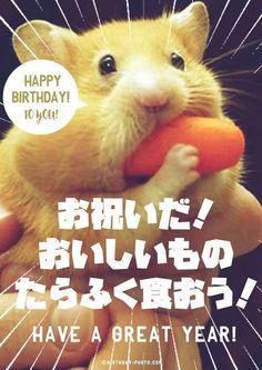 ハムスター好きの為のお誕生日おめでとう画像 Birthday Messages, Birthday Cards, Happy Birthday Animals, Birthday Photos, I Am Happy, Funny Cute, Special Day, Cat Lovers, Cute Animals