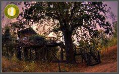 Tree House Hideaway in Bandhavgarh National Park, Madhya Pradesh Website : www.treehousehideaway.com