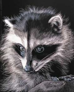 Free Spirit by Sandra Haynes Scratchboard ~ x Cute Animal Drawings, Animal Sketches, Art Drawings, Dog Sketches, Pencil Drawings, Wildlife Paintings, Wildlife Art, Animal Paintings, Raccoon Drawing