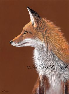Animals, Pastels paintings & artwork, SAA, Page 12 Animal Paintings, Animal Drawings, Pastel Paintings, Wolf Hybrid, Fox Collection, Fox Drawing, Fox Spirit, Fox Art, Pastel Art