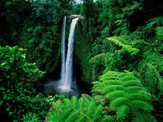 Green Forest With Waterfalls