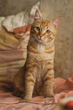 Marmalade / Ginger - Uno Man...