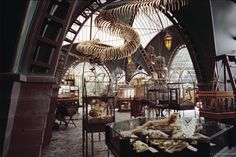 lemony snicket's Reptile Room