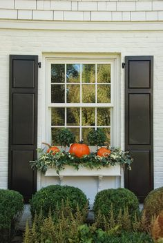 Simple fall window box. black shutters with white window box and boxwoods underneath