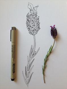 lavender ink