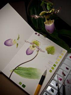 Моя ботаническая исследование эссе