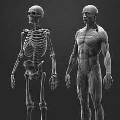 Anatomy Study, Joe Zheng on ArtStation at https://www.artstation.com/artwork/248xx