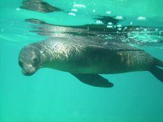 Diving Gordon's Rock, Galapagos