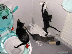 gatinhos fazendo bagunça no banheiro