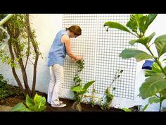 ¿Cómo cubrir un muro con trepadoras? - YouTube