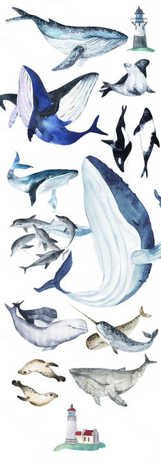 Watercolour animal illustrations. Oceanic Stories by KatyaBranch on @creativemarket