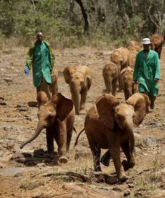 Sheldrick elephant orphanage in east Kenya...one of these little nuggets is my Kibo! :)