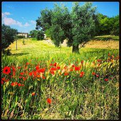 Passeggiando sui sentieri del Monte Conero, nel Parco del Conero  Ph. Fabia Buglioni
