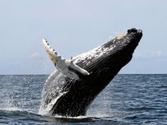 Find out what sea animal you think like. I got a Whale!!