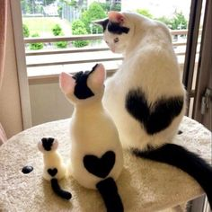 Feline Great: Classic Photos of Cats Being Cats - kittens Cute Little Animals, Cute Funny Animals, Funny Cats, Big Animals, Nature Animals, Cute Cats And Kittens, I Love Cats, Kittens Cutest, Kitty Cats