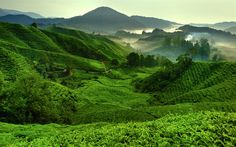 Download wallpapers 4k, Cameron Highlands, morning, tea plantations, hills, Malaysia, Asia