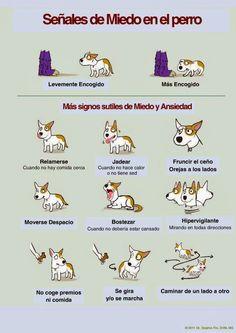 Blog de educación canina