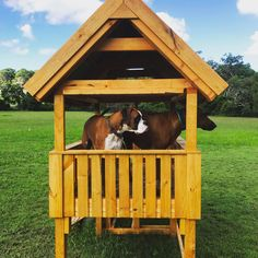 We have 4 Doggy Cubby Houses on the Farm. Made locally by hand.