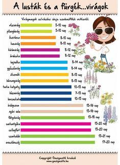 Előneveléssel nevelhető dísznövények: - gazigazito.hu