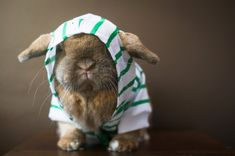 Bunny Print by kcartyphotography on Etsy