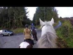 Hunting with Grallagh Harriers Nov Cross Country Jumps, Beach Rides, Horses For Sale, Show Jumping, The Locals, Equestrian, Ireland, Hunting, Deer Hunting