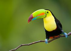 See a Toucan in real life. I did a report on them in 6th grade and have wanted to ever since.