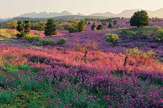 Australia  outback wild flowers