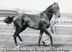 Kelso at Saratoga after winning the 2nd of his 3 Whitney Handicaps. He was Horse of the Year from 1960 -1964.