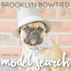 Our Spring 2016 Model Search is now closed! Winners will be announced in the next few days. I do want to say with 100% honesty that this is going to be a HARD decision and I loved every single one of your entries. It means a lot that you are all so eager to join the Brooklyn Bowtied team and I thank you profusely for your entries! #dogsinbowties #bowtie #dogbowtie #dapperdog #brooklyn #handmade #shopsmall #brooklynbowtied #madeinbrooklyn #rescuedog #adoptdontshop #etsy #dogsofbrooklyn…
