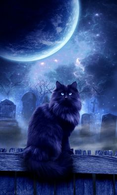 Full moon and beautiful cat