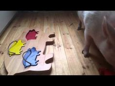 Moritz the Pig Is a Puzzle-Solving Genius - YouTube