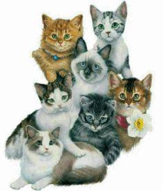 GIFS HERMOSOS: animalitos encontrados en la web