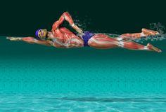 Aprenderás todo lo que necesitas saber sobre la técnica de crol, ejercicios para corregir fallos y errores nadando.