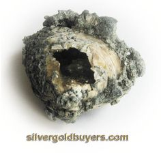 Geological Clam. $29.50