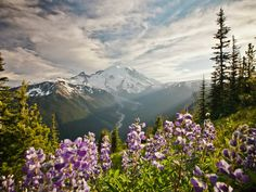 """""""The renowned wildflowers—glacier lilies, bear grass—bloom for a very limited season that generally peaks in mid-July and August."""""""