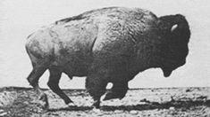 'Kill Every Buffalo You Can! Every Buffalo Dead Is an Indian Gone' - The Atlantic
