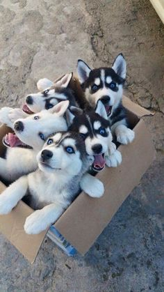 (Right, front dog) Please, please, help. Get me the crap out of this box. I beg you.