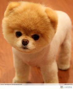 Ever so cute adorable I want one I want it Soooooo cute