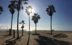 venice beach #travelinbee