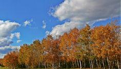 Grand Falls-Windsor, Fall View